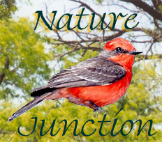 NatureJunction Store